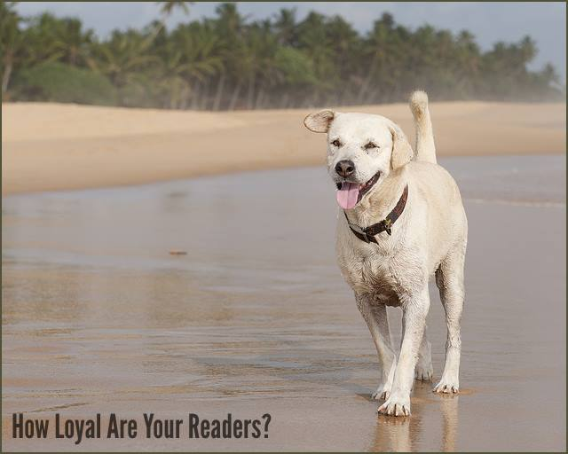 """<h5>▲ How Loyal Are Your Readers?</h5><p>Dog: (Hu)man's best friend. I went with the obvious """"loyalty"""" scenario but I bet you can think of many others to fit your perfect title.</p>"""