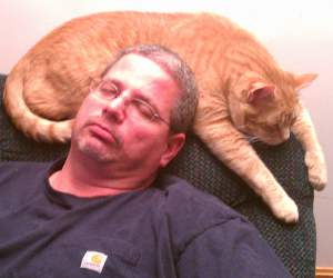 image - cat nap